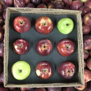 single layer apple box
