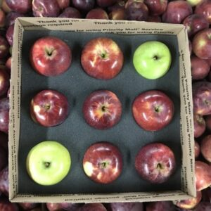 single layer apple box